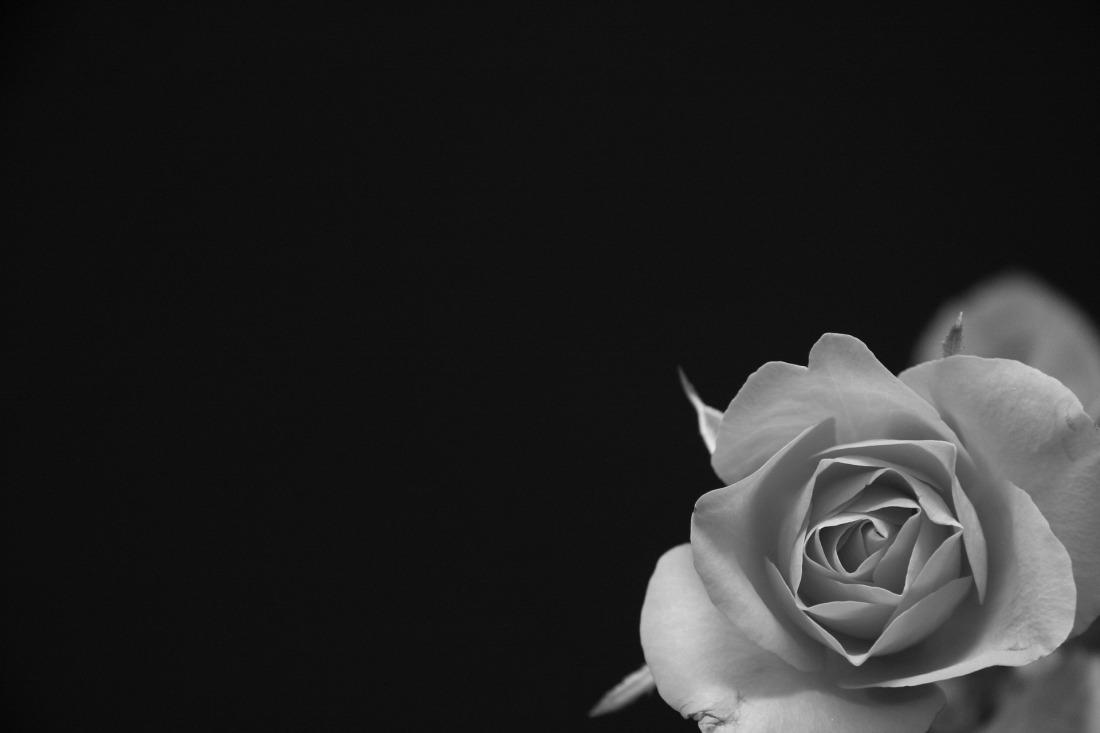 Geburt // Roses Revolution Day – Gegen Gewalt unter derGeburt